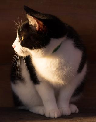 Алиса кошки