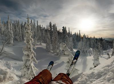 *** снег, солнце, зима, лес, ели, лыжи