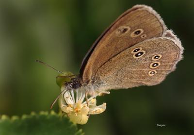 Ты попробуй - очень вкусно... бабочка цветок лето