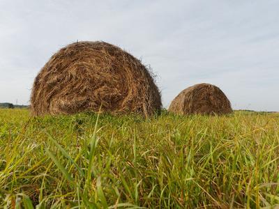 Заготовка сена природа сено утро осень