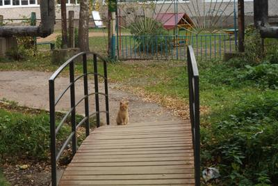 Осенний кот.