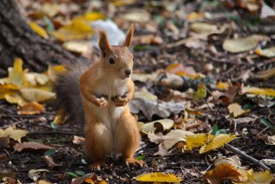 Да не брал я твои орехи!.. животные белка