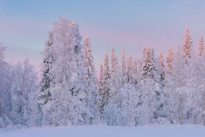 Зимний день севера Печора Коми Мороз
