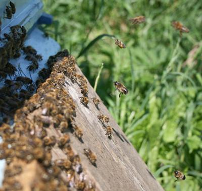Пчелки.. пчелы пчелки летят прилетают улетают