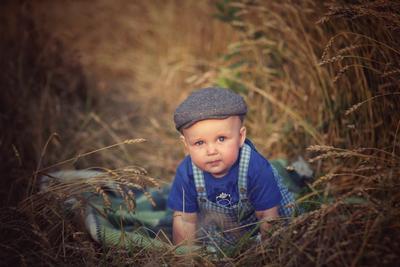 Комбайнер Ребёнок поле пшеница