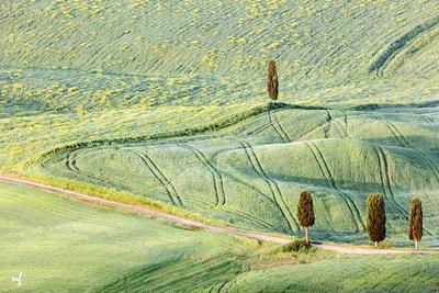 Май в Тоскане тоскана пьенца