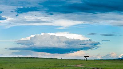 Совсем другая история Кения Масаи Мара Masai Mara
