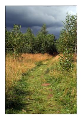 Август лес август тропа