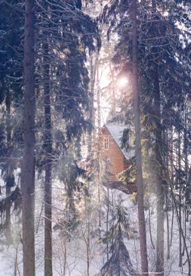 а в сосновом лесу тихо-тихо... сосновые ели