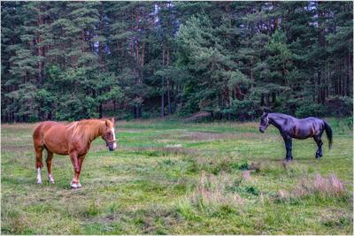 Встреча рига fitter36 лошадь природа лес