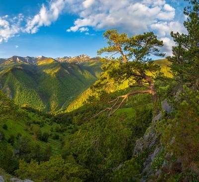 Сосны Архыза Северный Кавказ Горы гора Архыз хребет горное сосна сосны лес деревья лесное дерево путешествие скалы