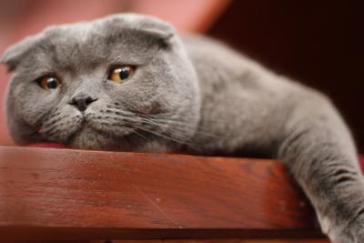 пацан взрослеет Кот, котик, Миша