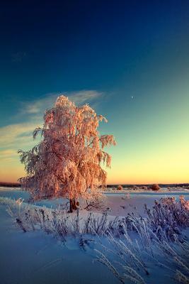 Морозный закат Север мурманская мороз закат заполярье Хибины
