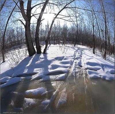 Пробуждение...  март солнце снег талые воды лес пробуждение Владимир Бугаев Vladimir Bugayev