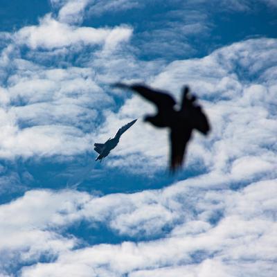 *** самолет птица две птицы в небе