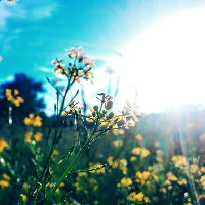 *** цветы трава природа солнце