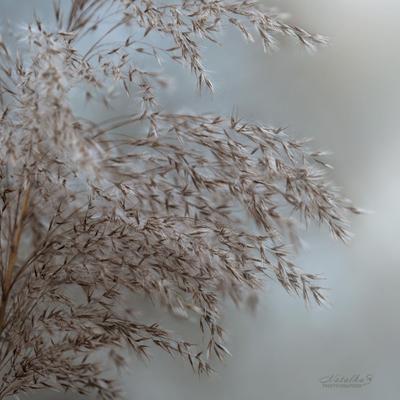 Предчувствие зимы Трава растения туман туманность река осень