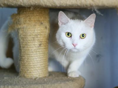 Чё те надо?... животные кот белый зеленые глаза