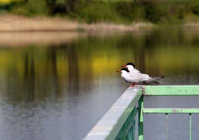 В одну сторону чайки озера в одну сторону
