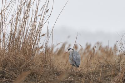 Серая Цапля птицы природа пеликан цапля весна солнце