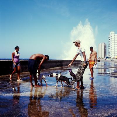 dogs and waves La Habana Cuba