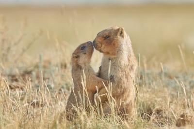 У них все как у людей. любовь романтика семья сурки лето природа