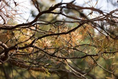 Ветки (twigs) 4 Ветки twigs Ревда природа лес деревья