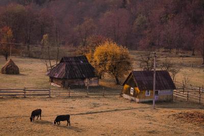 У подножия Карпат Горы тишина уют тепло