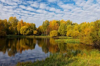 У озера СПб парк природа осень
