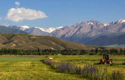 Работа в знойный полдень Иссык-кульская область Киргизия