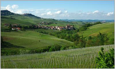 Зелёные холмы Пьемонта Италия Пьемонт Бароло