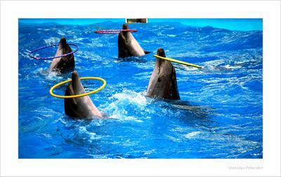 Игры с обручами по дельфинячьи