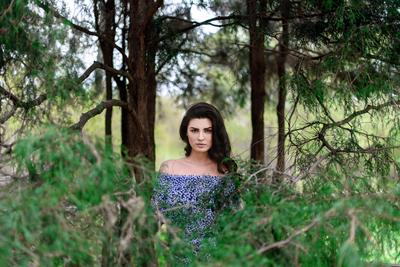 --- лес сад зелень af