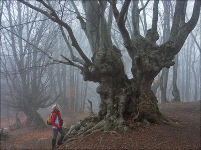 Страж перевала Крым Демерджи туман дерево бук энт