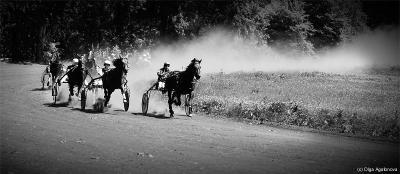 The races Бега лошадии соревнование