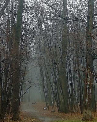*** туман парк