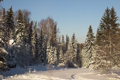 припорошены снегом красавицы ели)