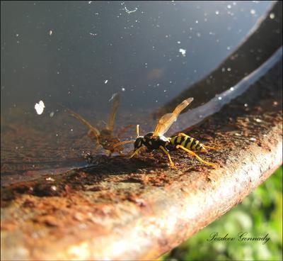 Зеркало мира макро оса насекомые солнце вода отражение