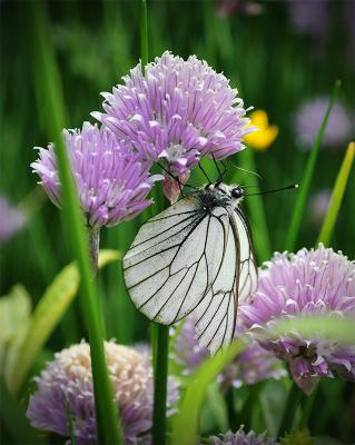 Бабочка на шаре бабочка лук