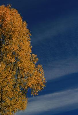 СОсень