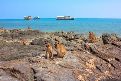 Приплыли и уплыли Остров Обезьян Таиланд