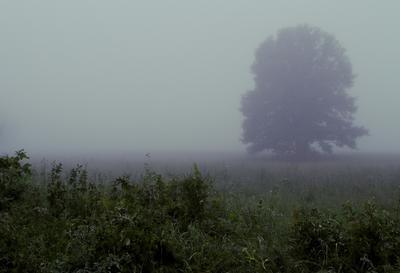 Когда поют соловьи... Утро Туман