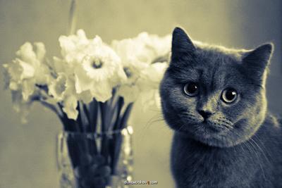 Бусинка кошка, цветы