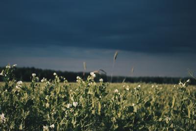 *** лето небо тучи гроза природа цветы поле