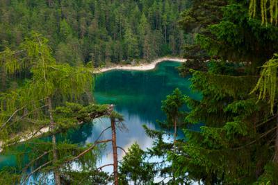 Лесное озеро озеро Австрия лес путешествие