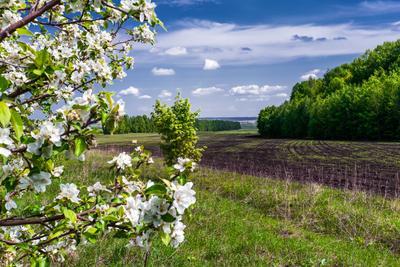 Среднерусский пейзаж. весна май