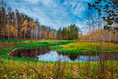 В гостях у осени! (3) Осень Тайга Лес