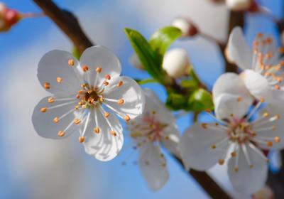 Яркий март белые цветы март весна аромат