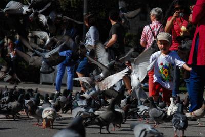 joy nikon D80 child pigeon barcelona spain street барселона испания