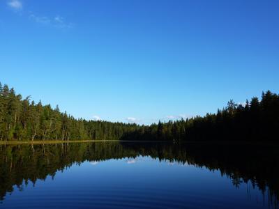 Урал в Ленинградской области) (озеро Охотничье) природа озеро лес